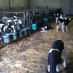 Irish Countrywide, Windmills, Calves, Goats and Pigs …..