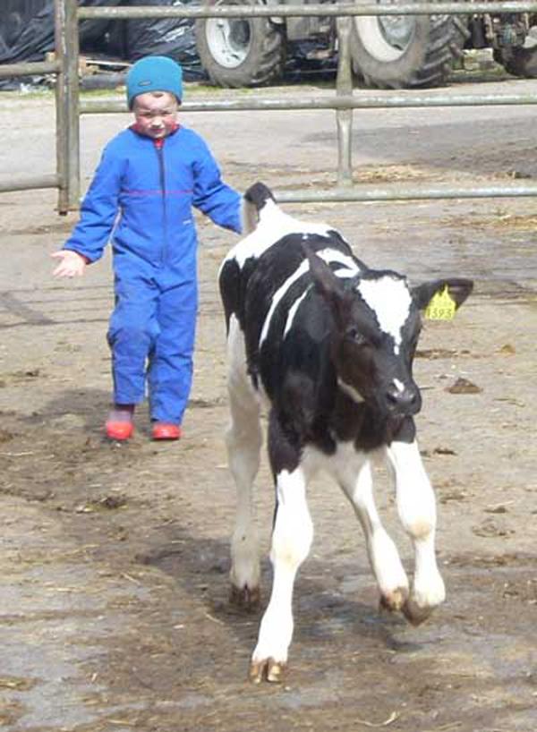 Stop that calf!