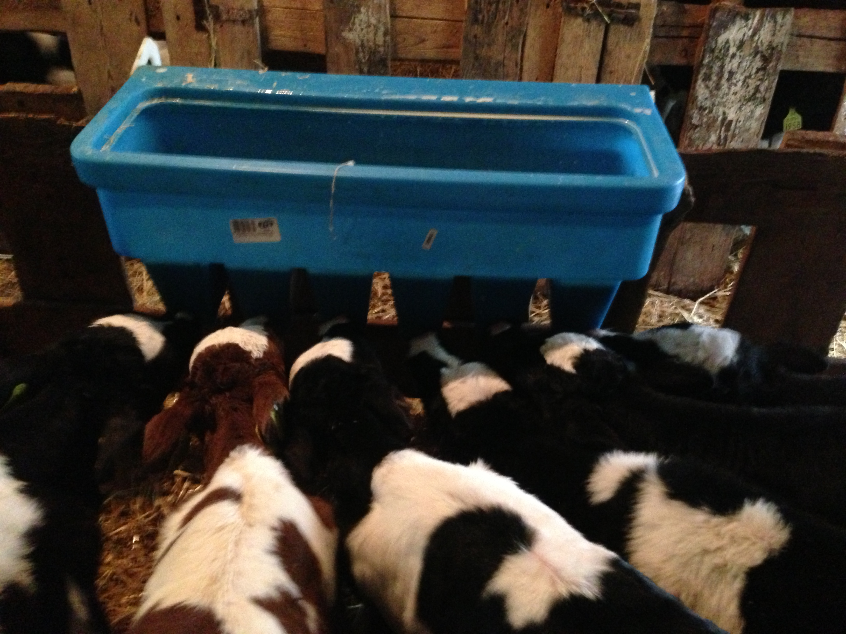 Calf Feeder Analysis