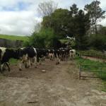 Wordless Wednesday – Farming Vines
