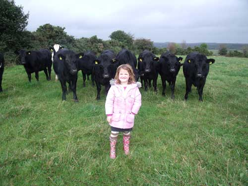 Daughter with Angus Bullocks
