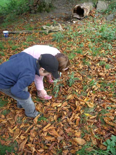 Looking for conkers