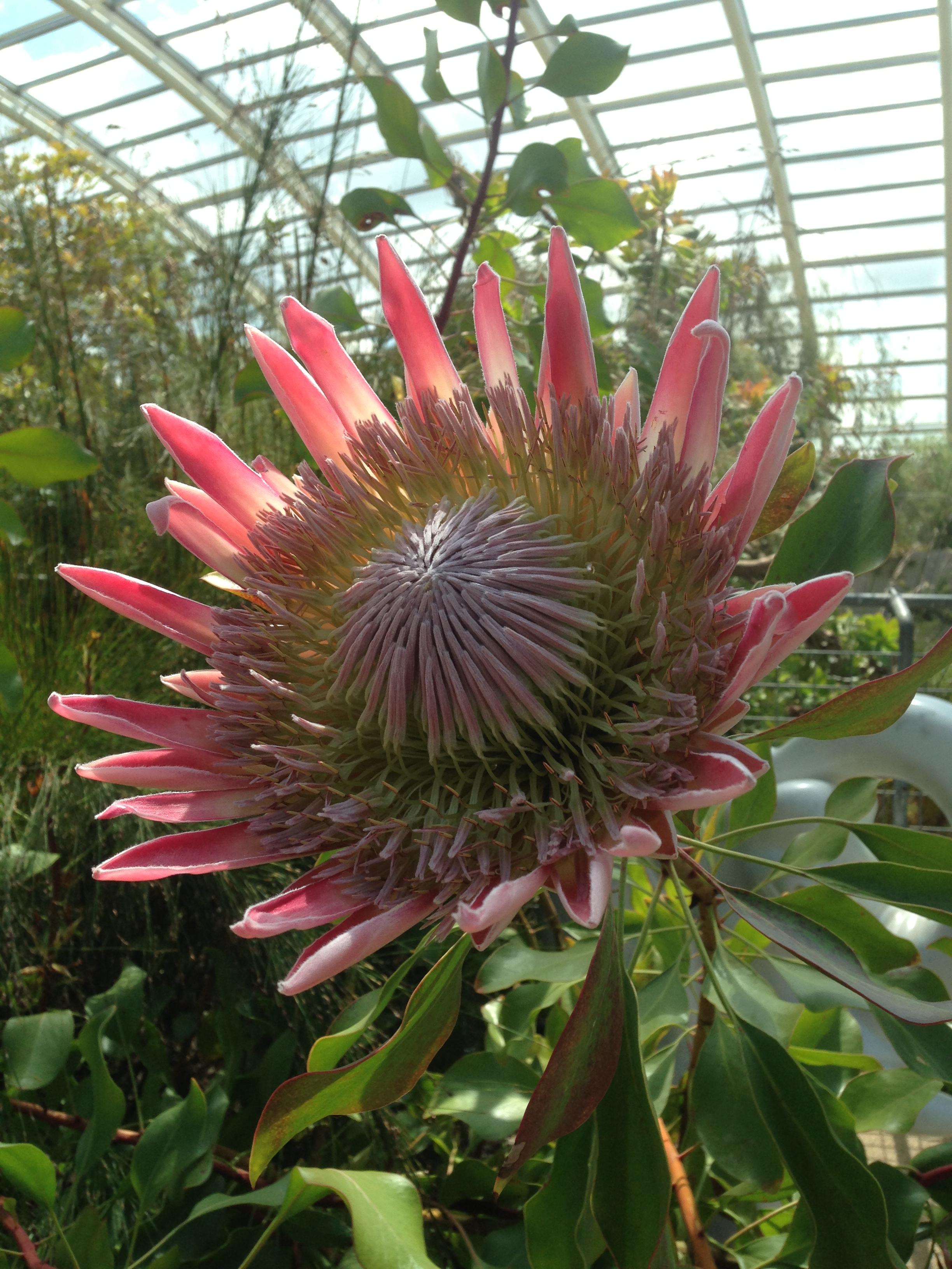 Wales Botanical Gardens