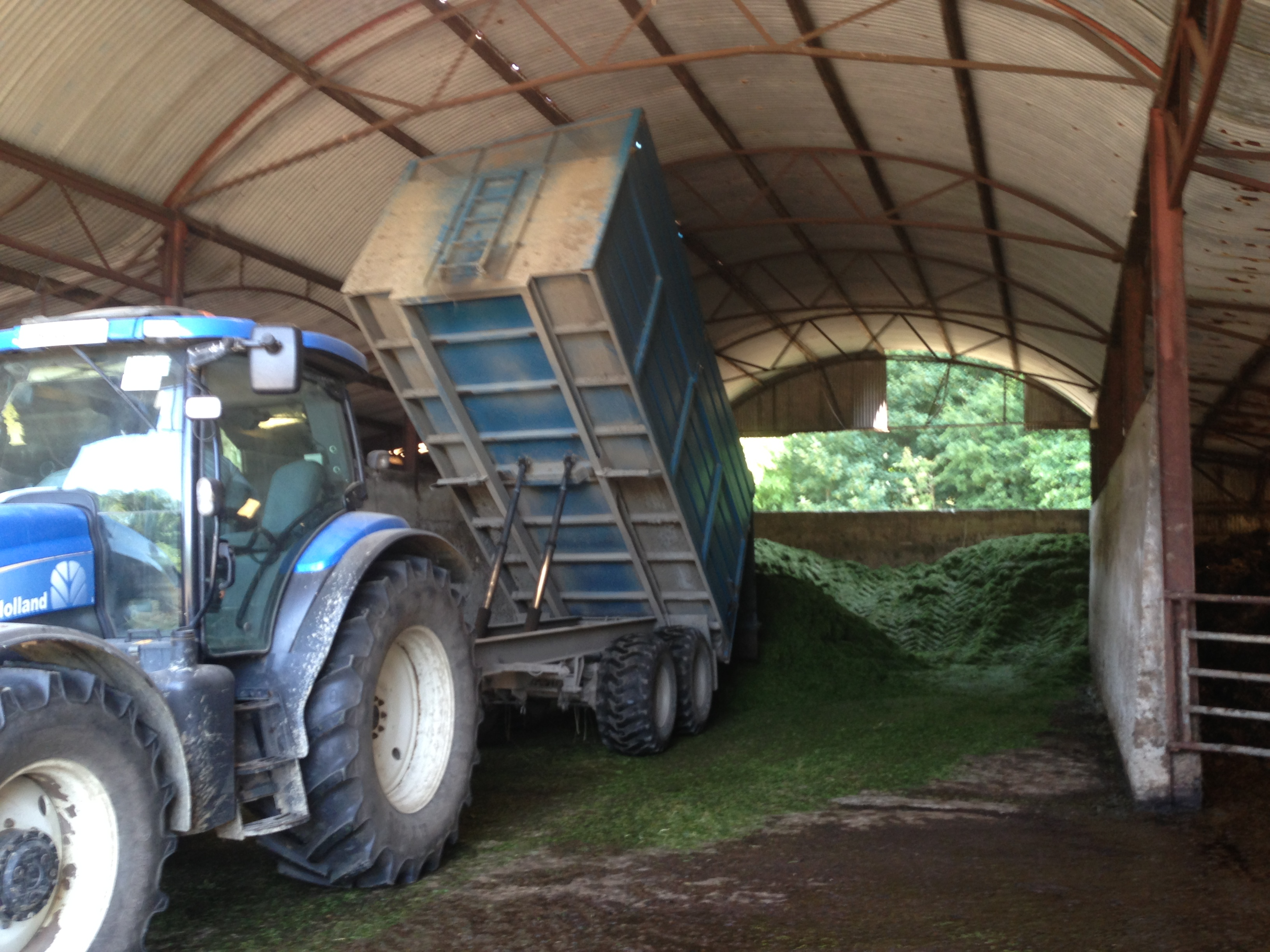 Silage - Unloading Silage