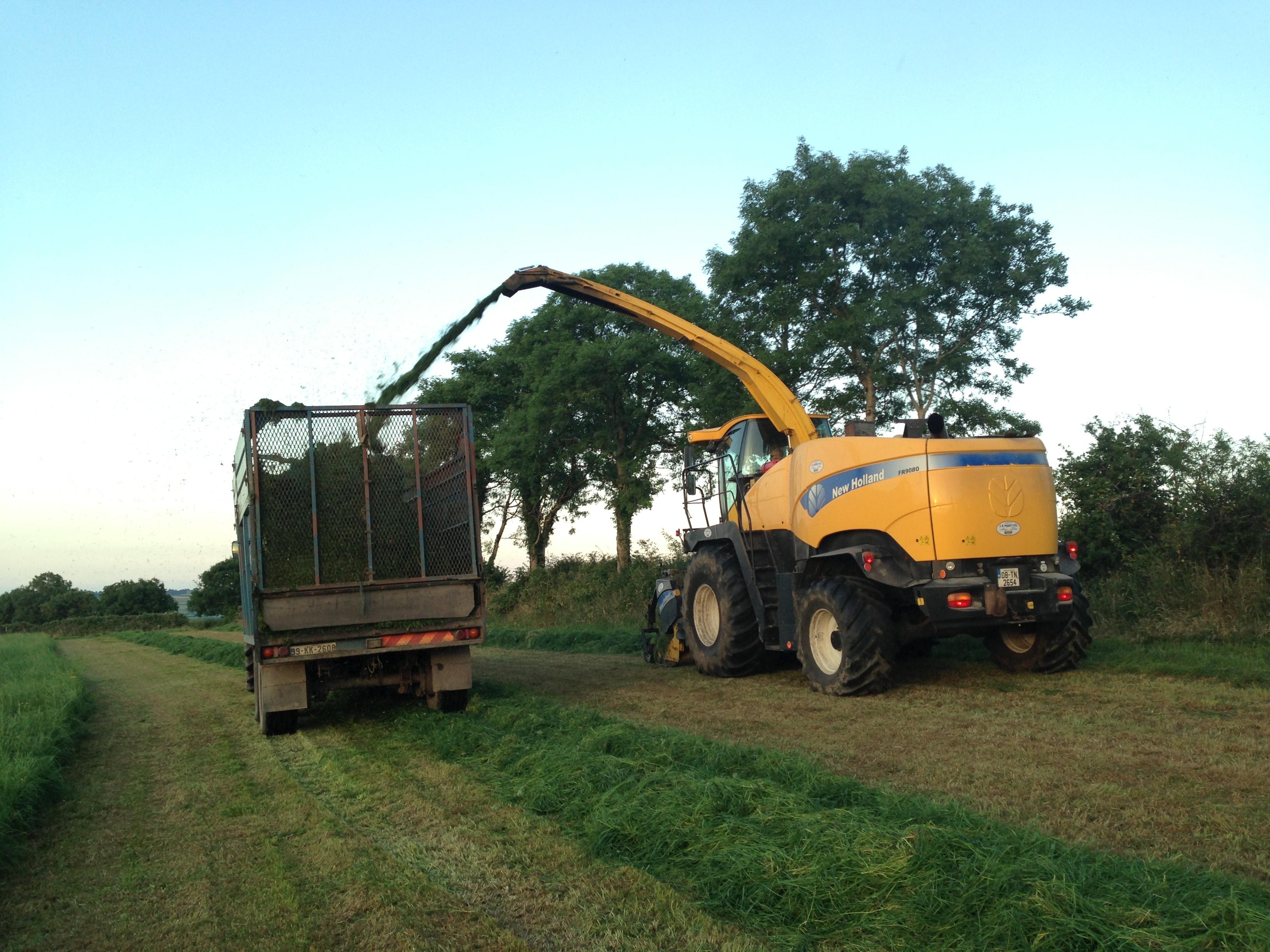 Silage Harvesting