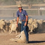 Farming Stereotypes – How Do They Reflect Our Farmers?