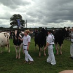Irish Farmerette goes to the Tullamore Show