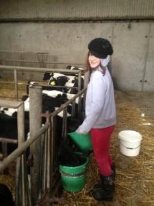 Bucket Feeding calves