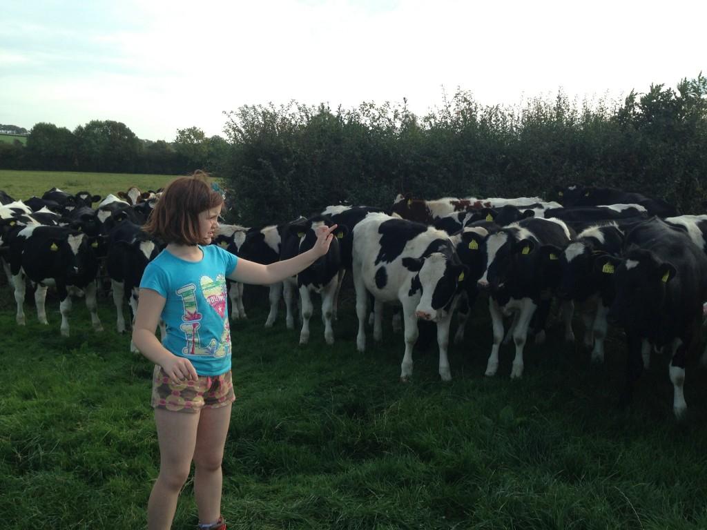 Mini farmer doing the herding