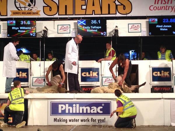 golden shears shearing
