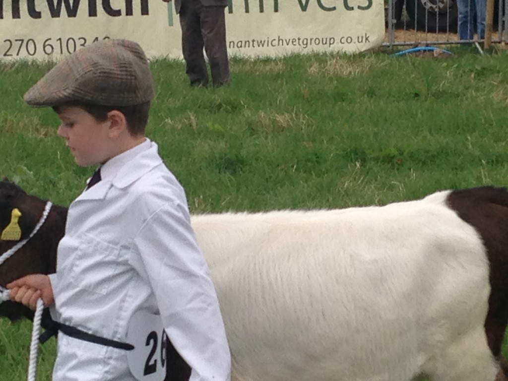 Showing Cattle at Nantwich Cattle