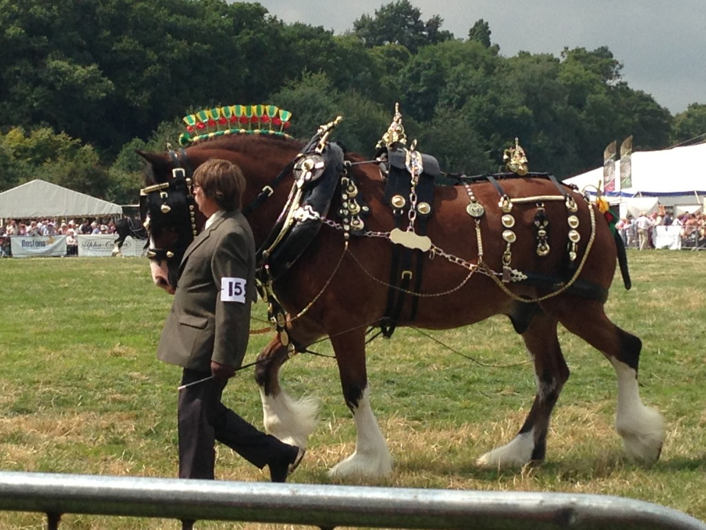 Shire Horses at Nantwich Show