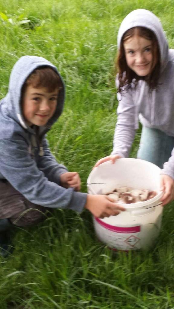 Picking Field Mushrooms