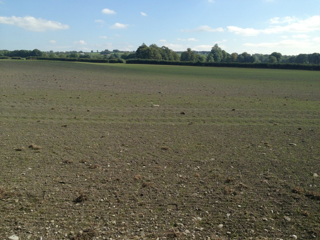 Field Re-seeded