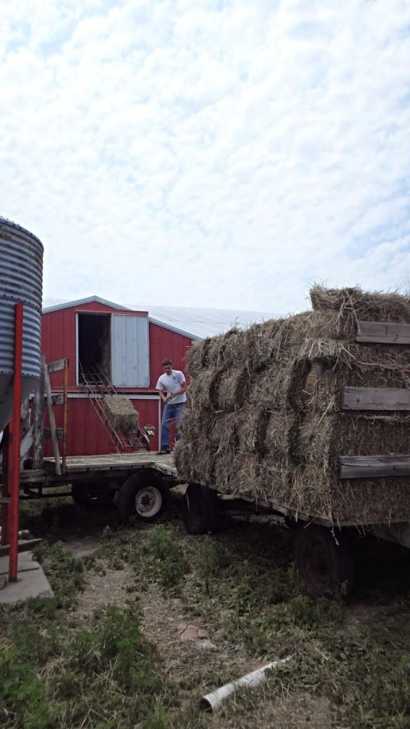 Donna's farm