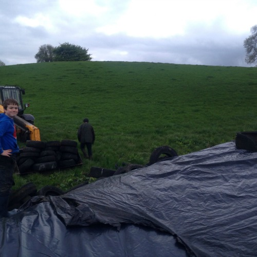 Covering the silage pit with polythene and tyres
