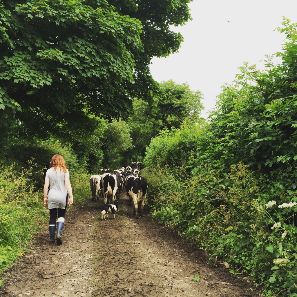 One girl and her pup bringing in the cows