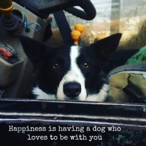 Happiness is having a dog who loves