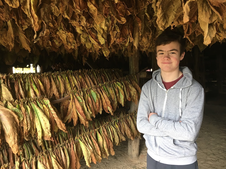 Tobacco drying near Vinales