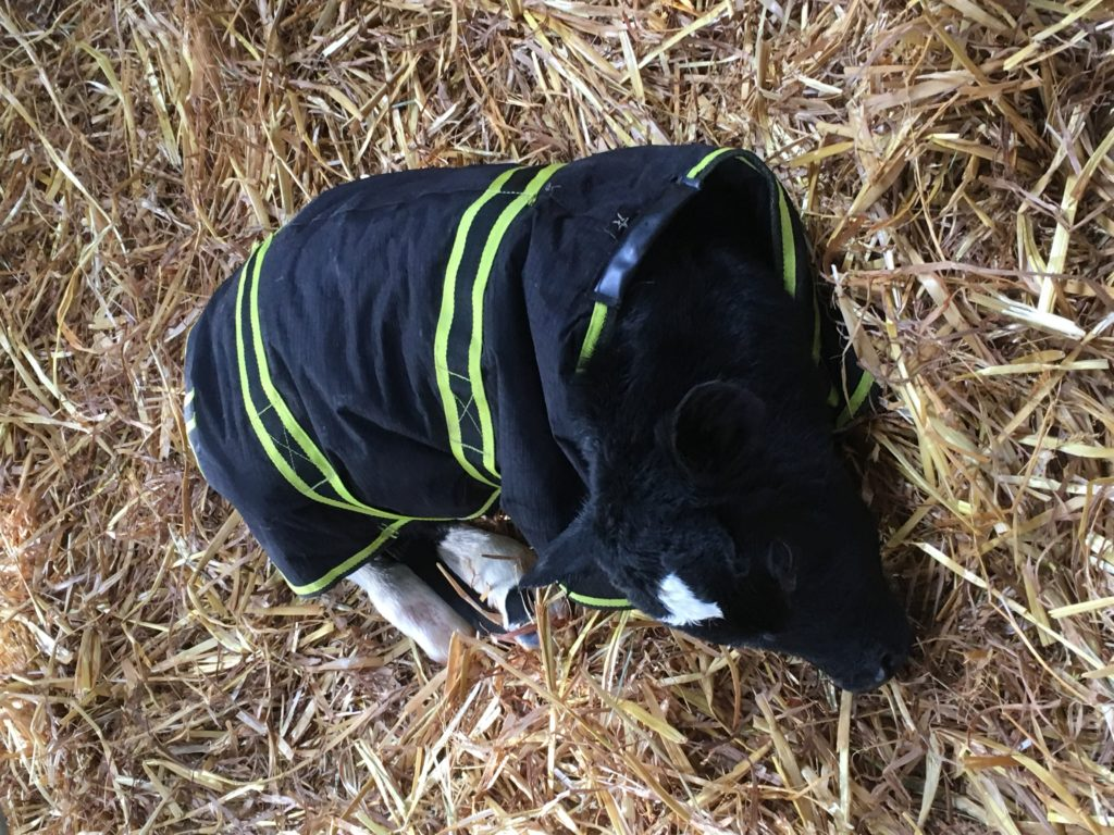 Cosy Calf Coat with high-viz stripes