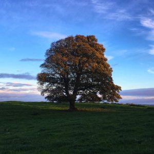 Tree in Ireland at Autumn