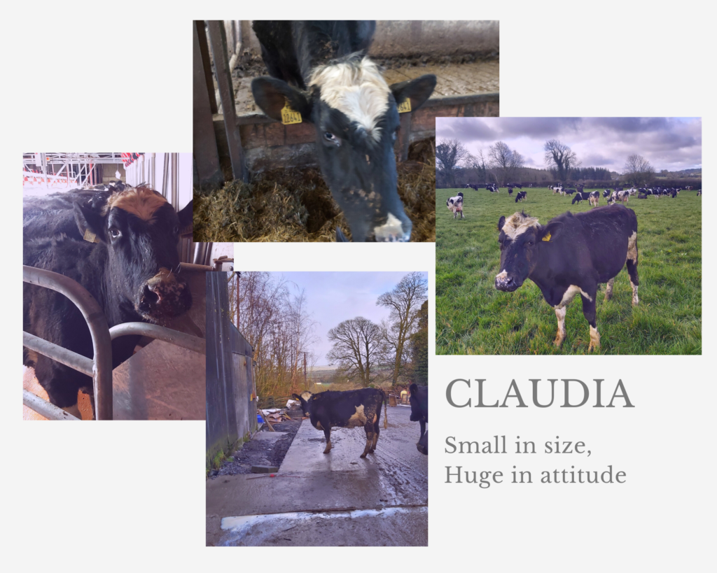 Claudia, small in size and big in attitude