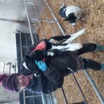 Me with the smallest calf of the year (he was 2 weeks old at this stage and I could still carry him under one arm)
